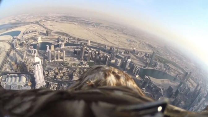 POV View as Eagle Dives From World's Tallest Building (Video)