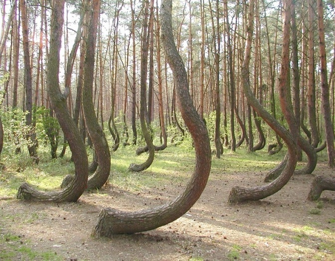 What are some of the best rare natural phenomena that occur on Earth? The Mysterious Crooked Forest in Poland (Video)