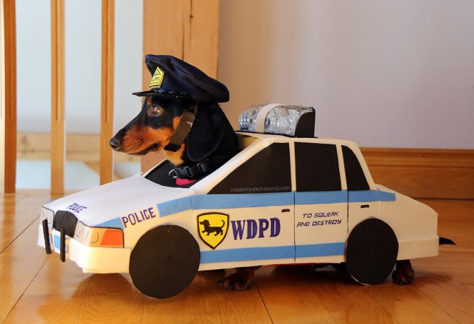 "Very Cute Dachshunds Play ""Cops & Robbers"" (Video)"