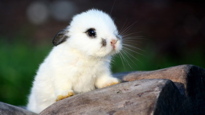 What animal species have the cutest babies?